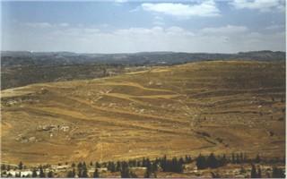Bethlehem fields